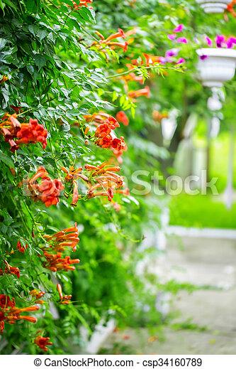 bloemen, achtergrond - csp34160789