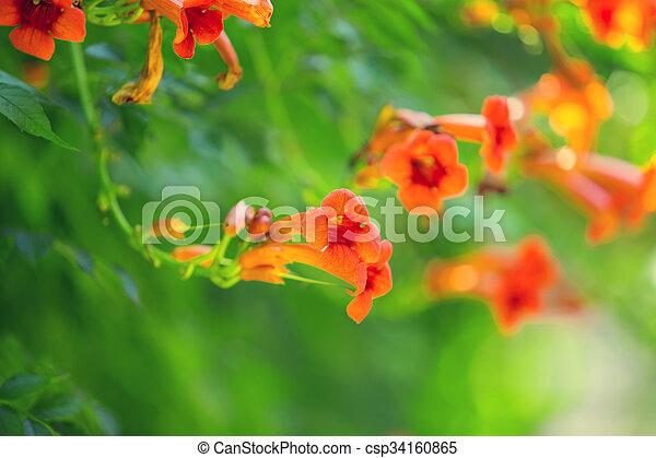 bloemen, achtergrond - csp34160865