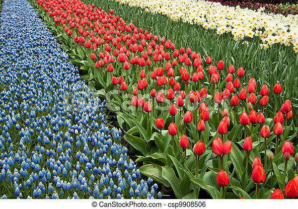 bloemen, achtergrond - csp9908506