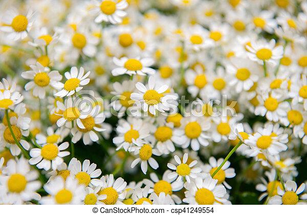 bloemen, achtergrond - csp41249554
