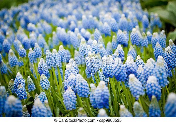bloemen, achtergrond - csp9908535