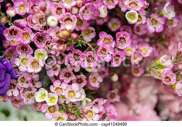 bloemen, achtergrond - csp41249499