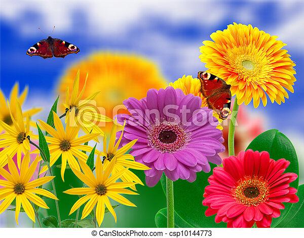 bloemen, gerber - csp10144773