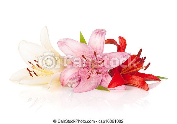 bloemen, lelie, kleurrijke - csp16861002