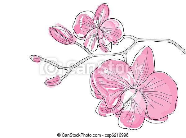bloemen, orchidee - csp6216998