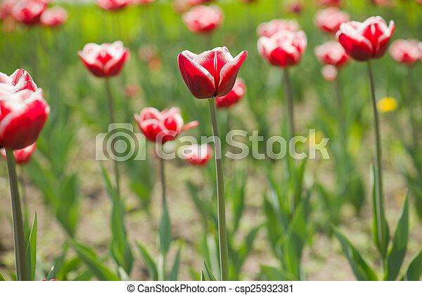 bloemen - csp25932381