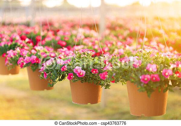 Bloemen In Pot.Bloemen Pot Petunia Bloem Hangend