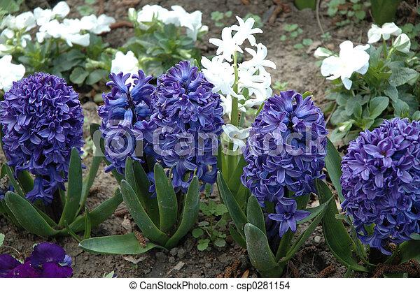 bloemen - csp0281154