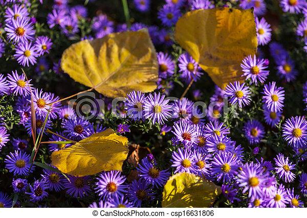bloemen - csp16631806