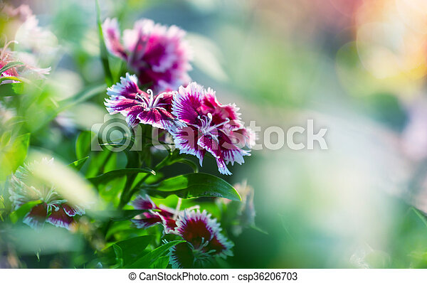 bloemen - csp36206703