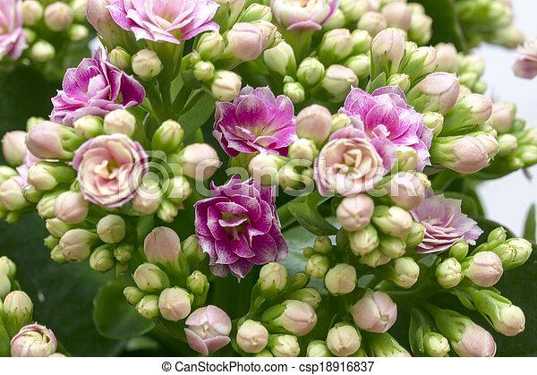 bloemen - csp18916837