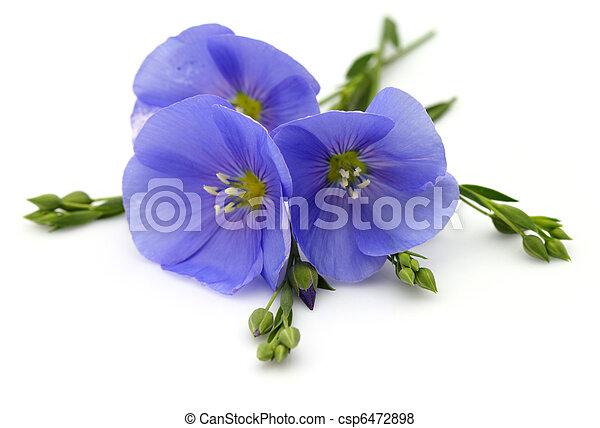 bloemen, vlas - csp6472898