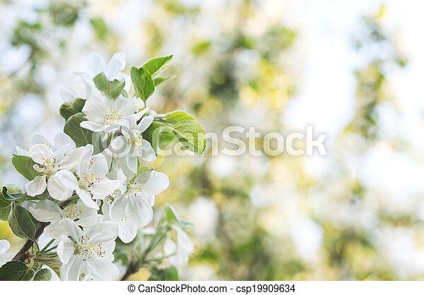 blomma, äpple - csp19909634