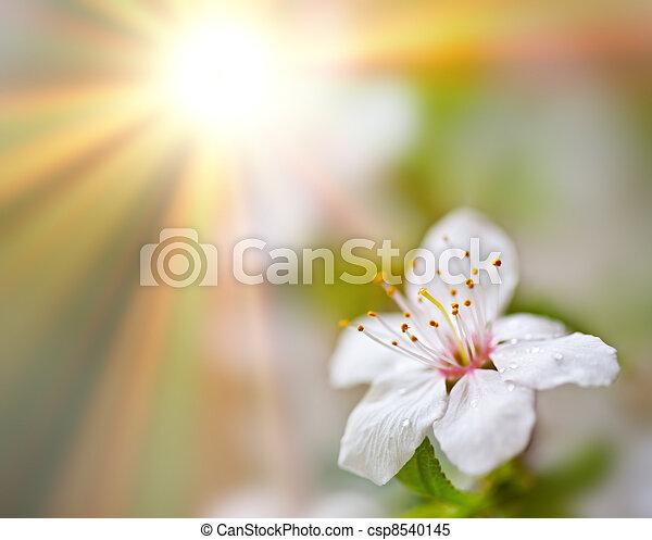 blommig, bakgrund., mjuk - csp8540145