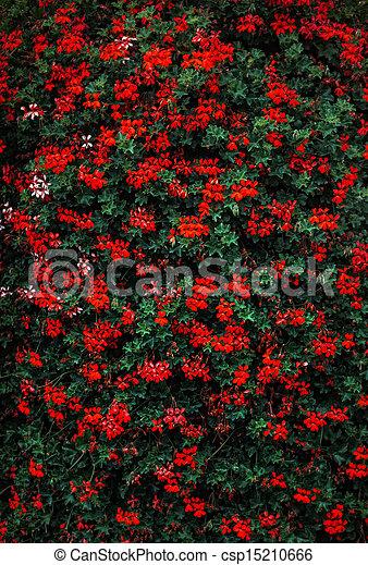 blommig, färgrik, bakgrund - csp15210666