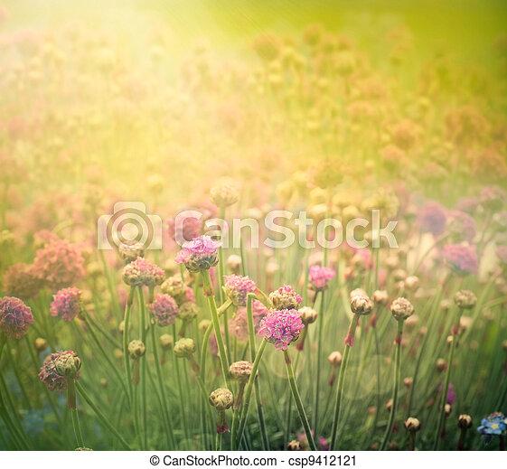 blommig, fjäder, bakgrund - csp9412121