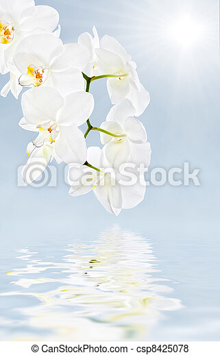 blommig, mjuk, bakgrund - csp8425078