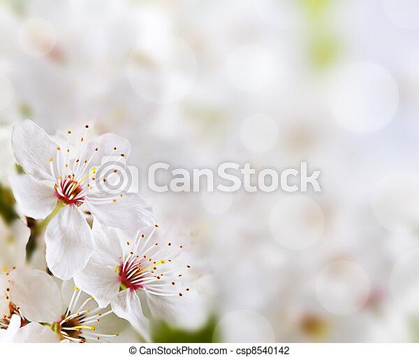 blommig, mjuk, bakgrund - csp8540142