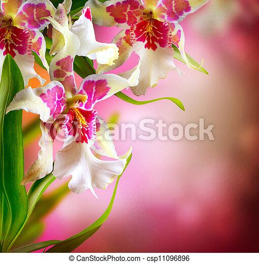 blomningen, design, orkidé - csp11096896