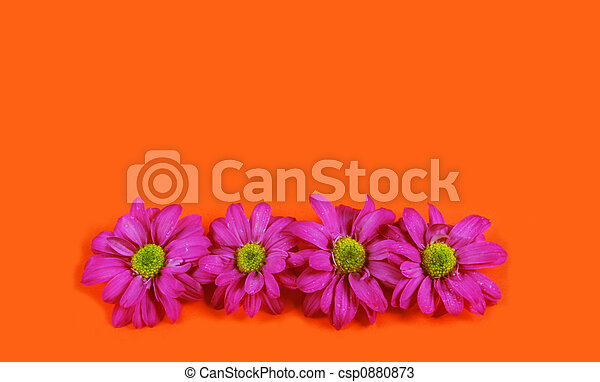 blomster - csp0880873