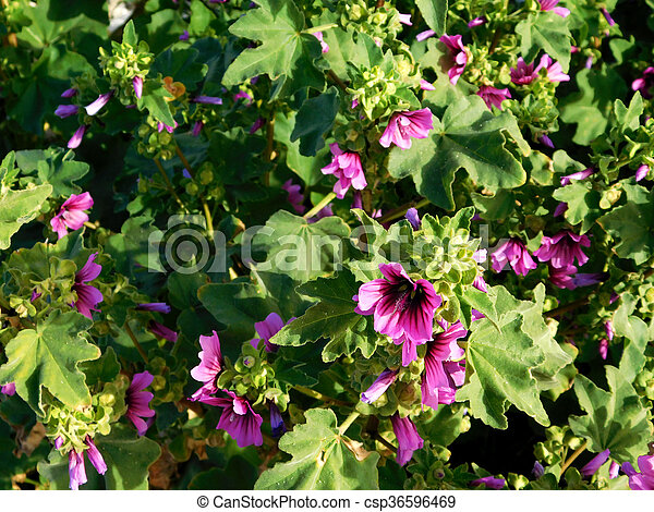 blomster - csp36596469