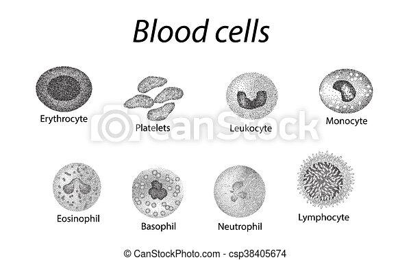 Blood cells. Set of monochrome cells. Red blood cells, platelets, leukocytes, lymphocytes, eosinophils, neutrophils, basophils, monocytes. Infographics. illustration on isolated background - csp38405674