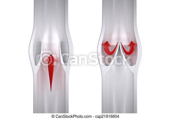 Blood Flow in Vein  - csp21916604