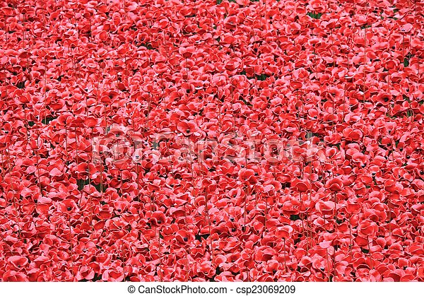 Blood Swept Lands and Seas of Red Poppies  - csp23069209