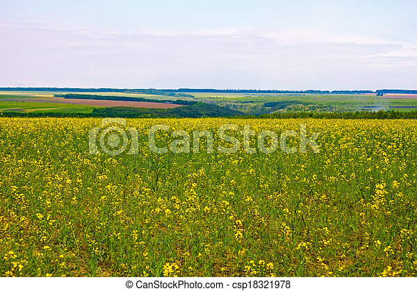 Blooming canola field - csp18321978
