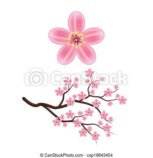 Blooming cherry branch vector illustration - csp19843454
