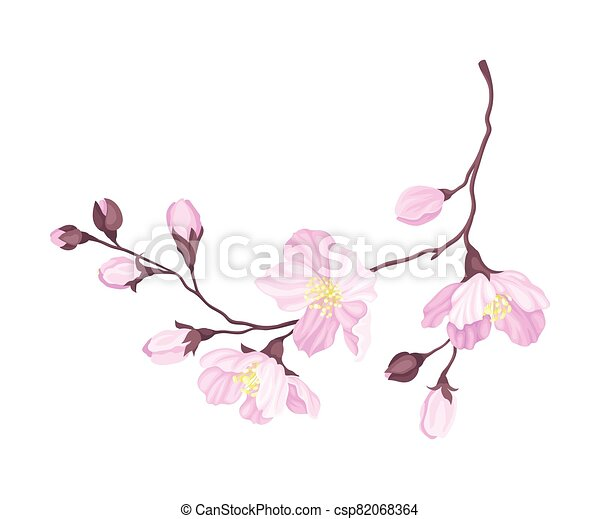 Blooming Cherry Branch with Tender Pink Flower Blossoms Vector Illustration - csp82068364