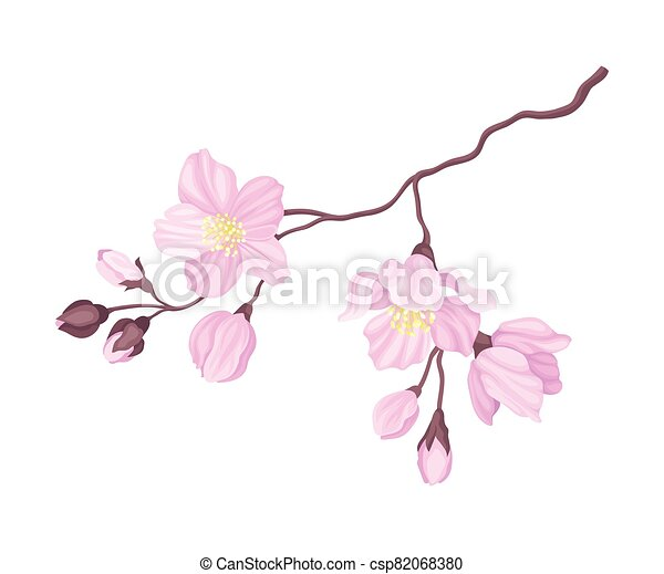 Blooming Cherry Branch with Tender Pink Flower Blossoms Vector Illustration - csp82068380