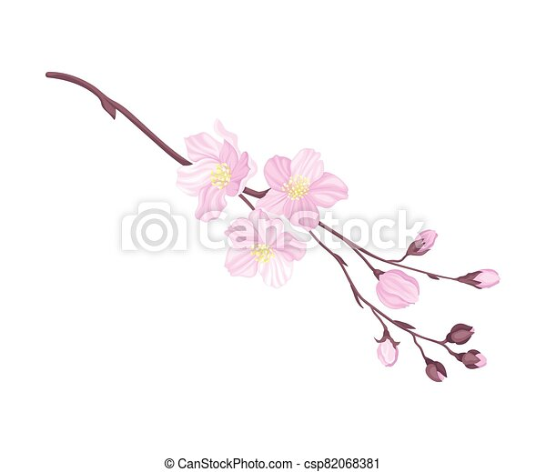Blooming Cherry Branch with Tender Pink Flower Blossoms Vector Illustration - csp82068381