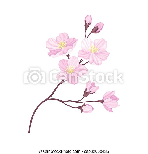 Blooming Cherry Branch with Tender Pink Flower Blossoms Vector Illustration - csp82068435