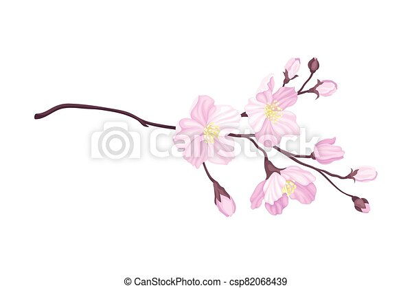 Blooming Cherry Branch with Tender Pink Flower Blossoms Vector Illustration - csp82068439