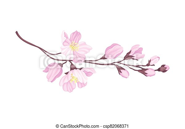 Blooming Cherry Branch with Tender Pink Flower Blossoms Vector Illustration - csp82068371
