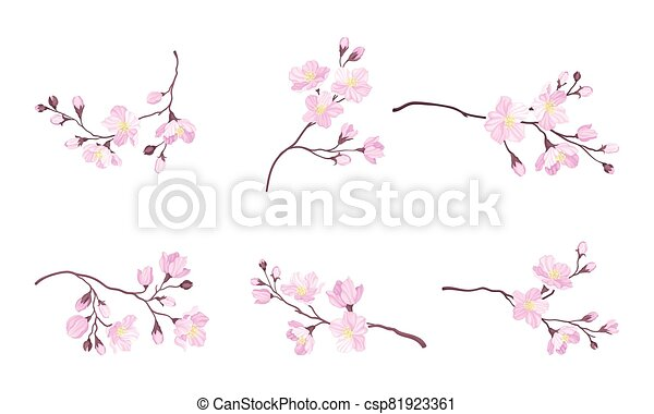 Blooming Cherry Branches with Tender Pink Flower Blossoms Vector Set - csp81923361
