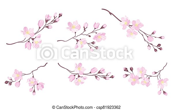Blooming Cherry Branches with Tender Pink Flower Blossoms Vector Set - csp81923362