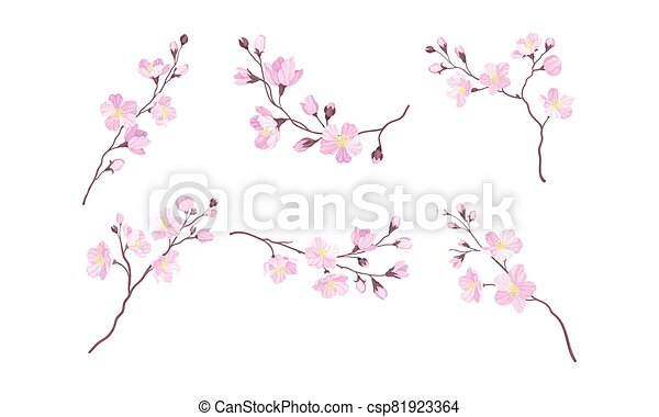 Blooming Cherry Branches with Tender Pink Flower Blossoms Vector Set - csp81923364