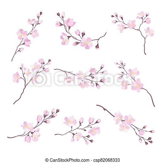 Blooming Cherry Branches with Tender Pink Flower Blossoms Vector Set - csp82068333