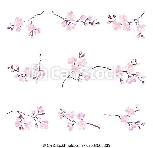 Blooming Cherry Branches with Tender Pink Flower Blossoms Vector Set - csp82068339