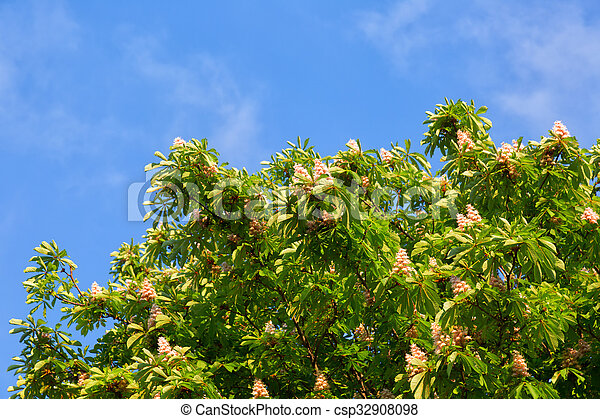 Blooming chestnut tree against the bright blue sky - csp32908098