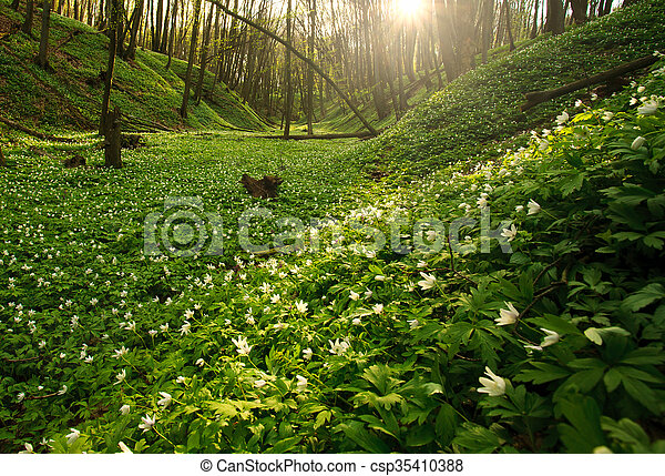 Blooming green forest in the rays of dawn sun - csp35410388