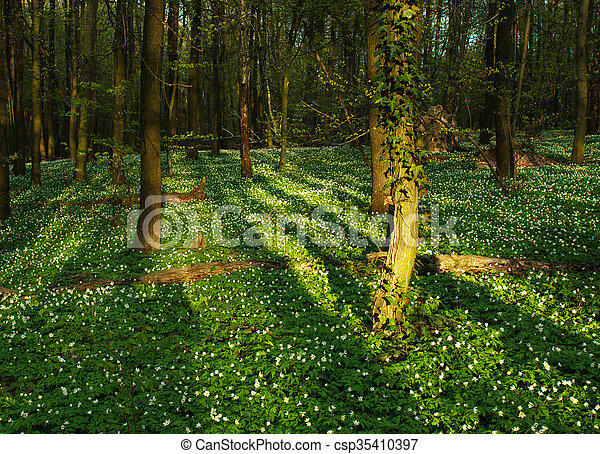 Blooming green forest in the rays of dawn sun - csp35410397