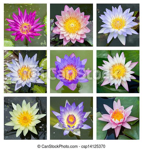 Blooming lotus flower - set 1 - csp14125370