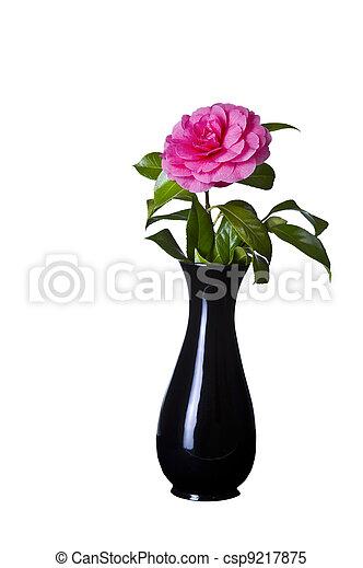 Blooming Pink Flower In Black Vase Blooming Pink Native Flower In