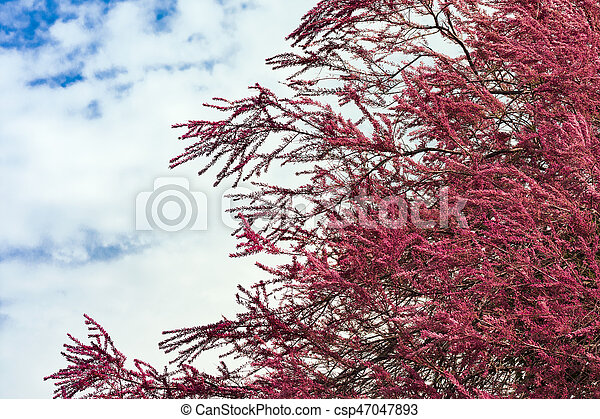 Blooming pink tree blooming tree with small pink flowers at springtime blooming pink tree csp47047893 mightylinksfo