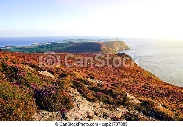 Blooming Purple Heather, Cliffs and Sea. Isle of Man - csp21737883