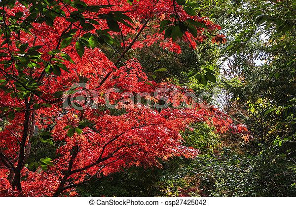 Blooming red flowers tree - csp27425042