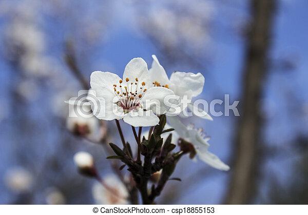 BLOSSOM Flower ,hdr - csp18855153